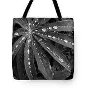 Lupin Leaves With Rain Drops  Tote Bag