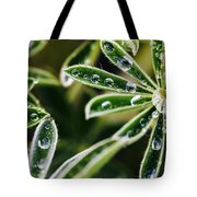 Lupine Leaves Decorated With Dew Drops Tote Bag
