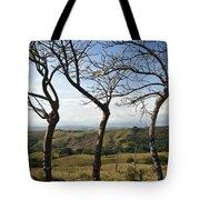 Lush Land Leafless Trees Iv Tote Bag