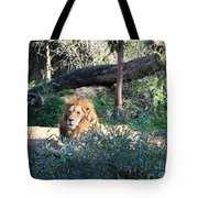 Lying Lion Tote Bag