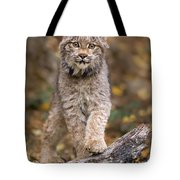 Lynx Kit Tote Bag