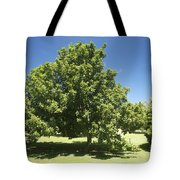 Macadamia Nut Tree Tote Bag by Kicka Witte - Printscapes