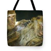 Macaques Jerez De La Frontera Spain Tote Bag
