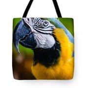 Duke Macaw Tote Bag