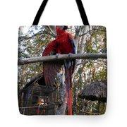 Macaw Guatemala Tote Bag