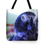 Macaw Parrot Blue Looking At You Tote Bag