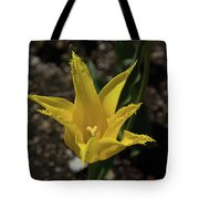 Mackinac Island Flowers 10663 Tote Bag