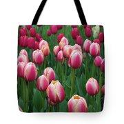 Mackinac Island Tulips 10681 Tote Bag