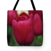 Macknac Island Tulips 10393 Tote Bag