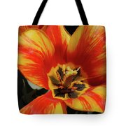 Macro Of A Blooming Striped Yellow And Red Tulip Tote Bag