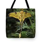 Madagascar Comet Moth Tote Bag