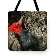 Magellanic Woodpecker - Patagonia Tote Bag