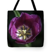 Magenta Tulip Center Squared Tote Bag