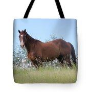 Magnificent Horse Tote Bag