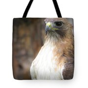 Magnificent Red-tailed Hawk  Tote Bag