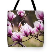 Magnolia Blooming In An Early Spring Tote Bag