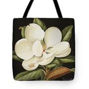 Magnolia Grandiflora Tote Bag by Jenny Barron