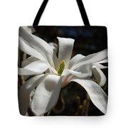 Magnolia Stellata Tote Bag