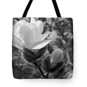 Magnolias In Spring Tote Bag