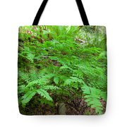Maidenhair Ferns In Columbia River Gorge Tote Bag