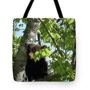 Maine Black Bear Cub In Tree Tote Bag