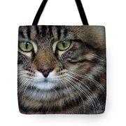 Maine Coon Cat Portrait Tote Bag