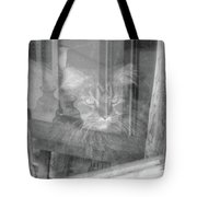 Maine Coon In Window Tote Bag