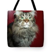Maine Coon Portrait Tote Bag