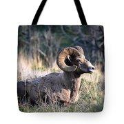 Majestic Bighorn Sheep Tote Bag