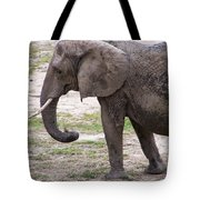 Majestic Elephant  Tote Bag