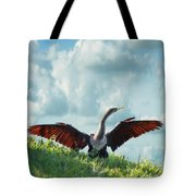 Male American Anhinga  Tote Bag