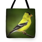 Male American Golden Finch On Twig Tote Bag