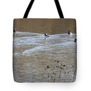 Male And Female Bufflehead Ducks  Tote Bag