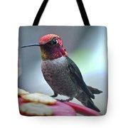 Male Anna's Hummingbird On Feeder Perch Tote Bag