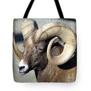 Male Bighorn Sheep Ram Tote Bag