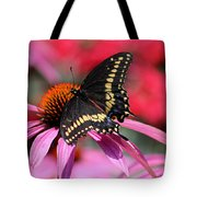 Male Black Swallowtail Butterfly On Echinacea Plant Tote Bag