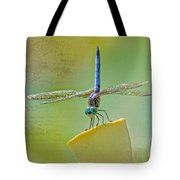 Male Blue Dasher Dragonfly Tote Bag