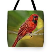 Male Cardinal Headshot  Tote Bag
