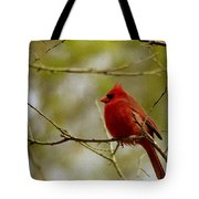Male Cardnial Tote Bag