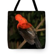 Male Cock Of The Rock Tote Bag