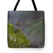 Male Common Chaffinch  Tote Bag