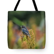 Male Cowbird Feasts On Milo In Shiloh National Military Park, Tennessee Tote Bag