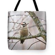 Male Downey Woodpecker Tote Bag
