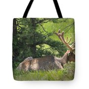 D10271-male Elk 2  Tote Bag