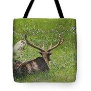 D10270-male Elk  Tote Bag