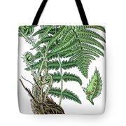 male fern, Dryopteris filix-mas Tote Bag