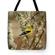 Male Finch In Blossoms Tote Bag