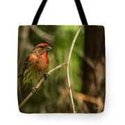 Male Finch In Red Plumage Tote Bag