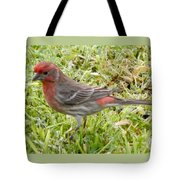 Male House Finch Tote Bag
