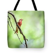 Male House Finch Out On A Limb Tote Bag